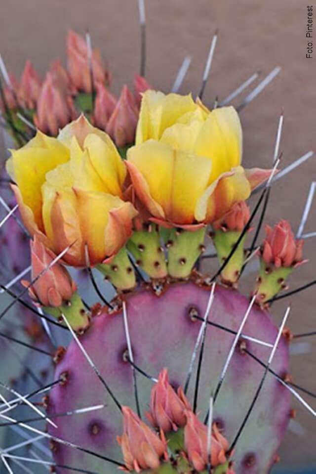 foto de cactus floreciendo