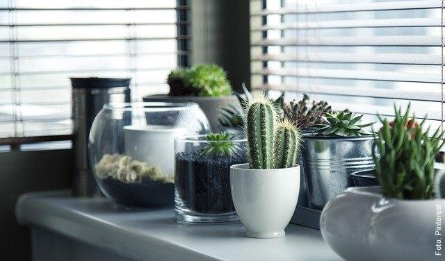 foto de cactus en una repisa