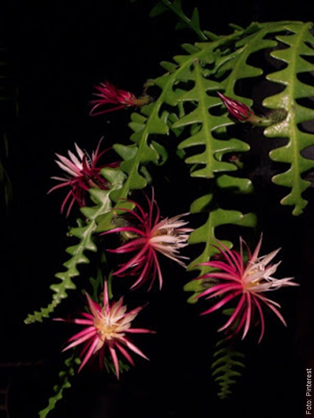 foto de clase de cactus