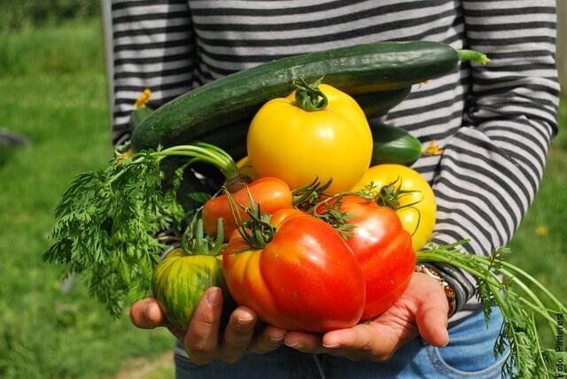 foto de productos vegetales