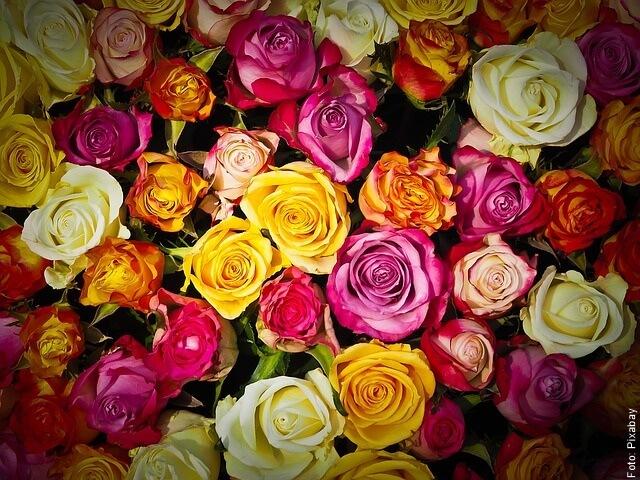 foto de muchas rosas