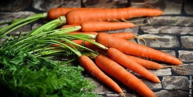 foto de zanahorias con rama