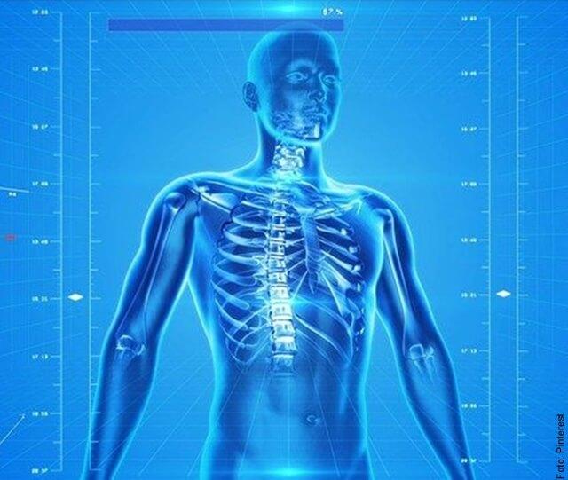 ilustración del sistema óseo