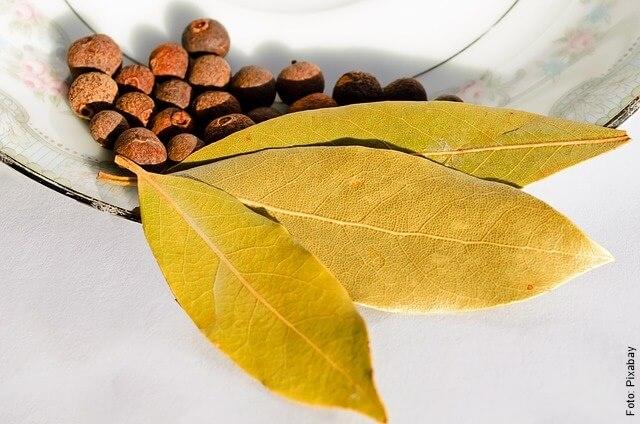 foto de hojas de laurel