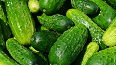 ¿Cómo cultivar pepino? Tips y recomendaciones
