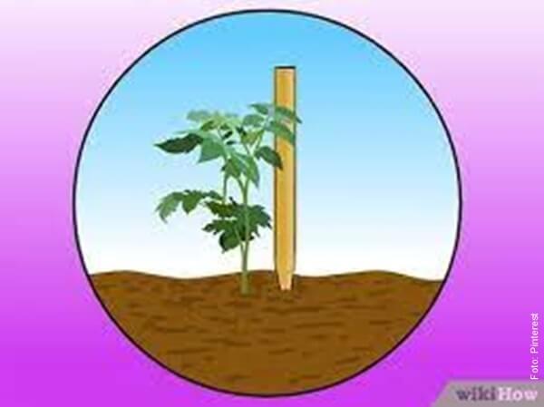 ilustración de sembrar pepino