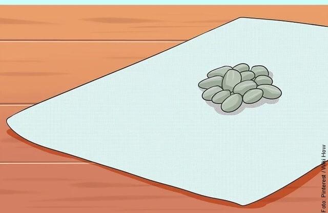 ilustración de sembrar girasol