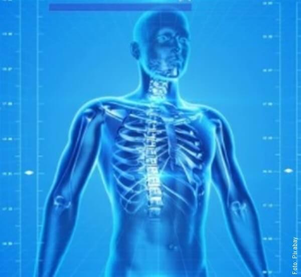 ilustración de huesos