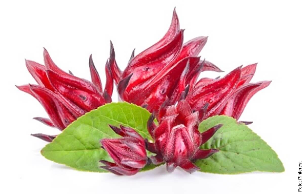 ¿Para qué sirve la flor de Jamaica? Estos son sus usos