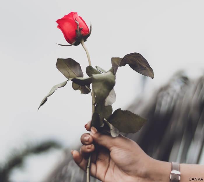 Foto de mano de una persona regalando una rosa roja