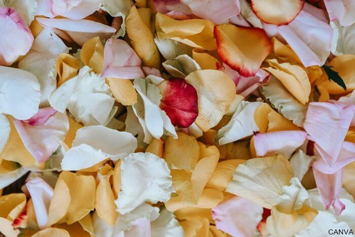 Foto de petalos de rosas de colores para ilustrar Significado de las rosas rojas cuando te las regalan