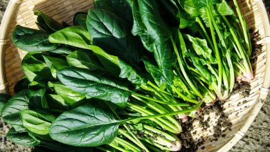 ¿Cómo sembrar espinacas? Hazlo fácilmente en casa