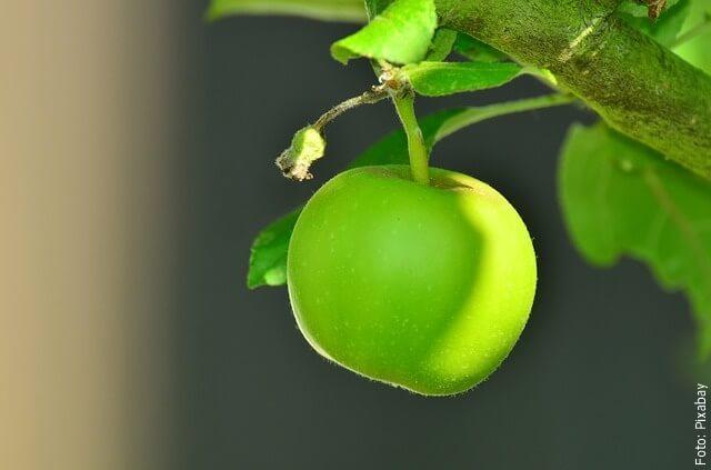 foto de manzana verde