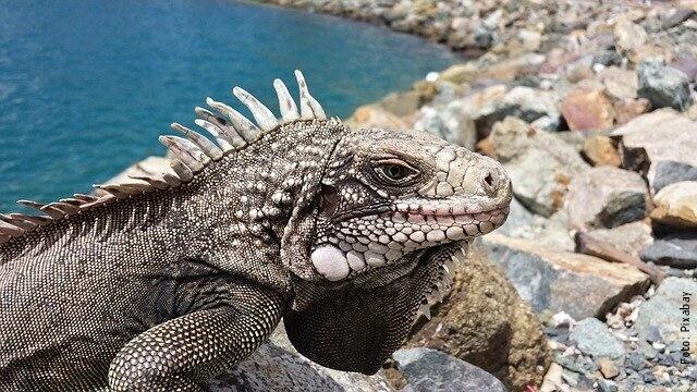 foto de lagarto en el mar