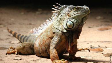 ¿Qué significa soñar con lagartos? ¡No lo creerás!