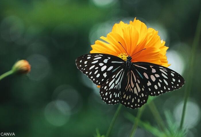 Foto de una mariposa en una flor