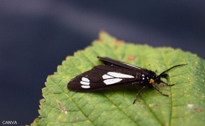 Foto de una mariposa negra sobre una hoja