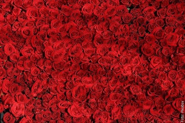 foto de rosas rojas