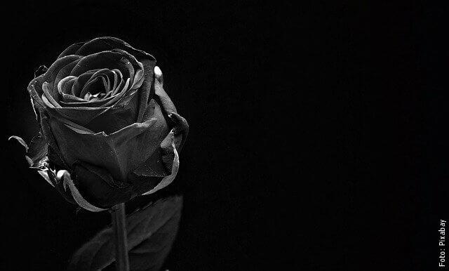 foto de rosas negras
