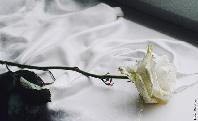foto de rosas blancas