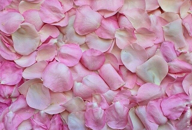 foto de pétalos de rosas