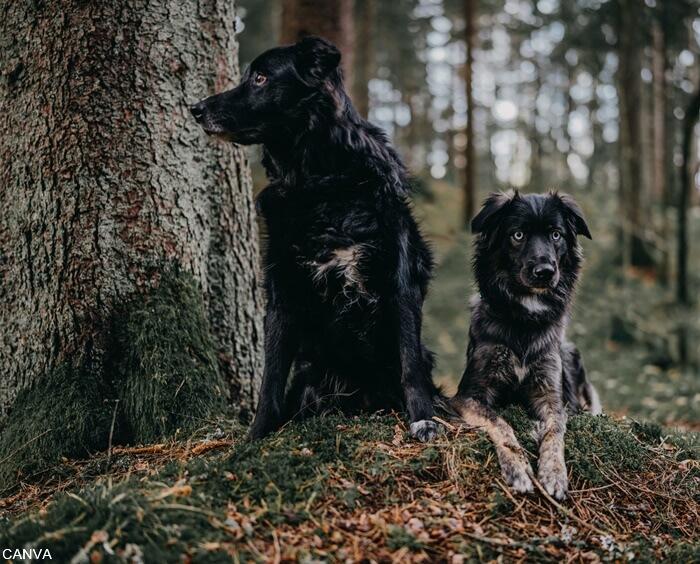 Foto perros negros en el bosque