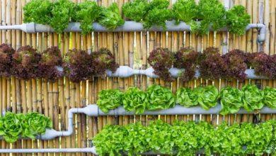 ¿Cómo hacer un cultivo hidropónico? ¡Inténtalo en casa!