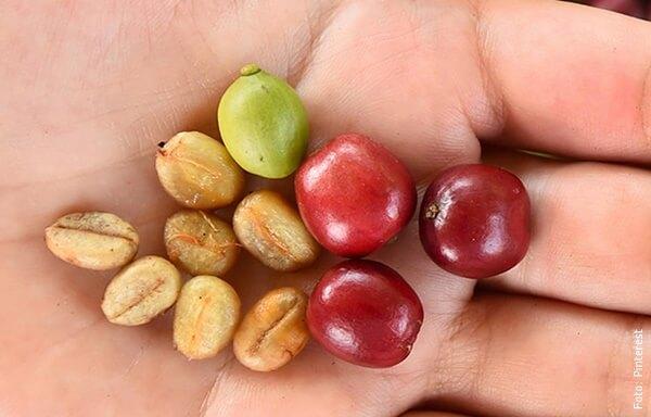 foto de semillas de café