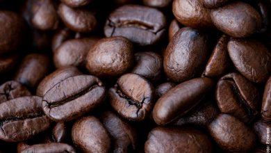 ¿Cómo sembrar café? ¡Sí, si es posible tenerlo en casa!