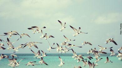 ¿Qué significa soñar con pájaros? ¡Libera tus deseos!